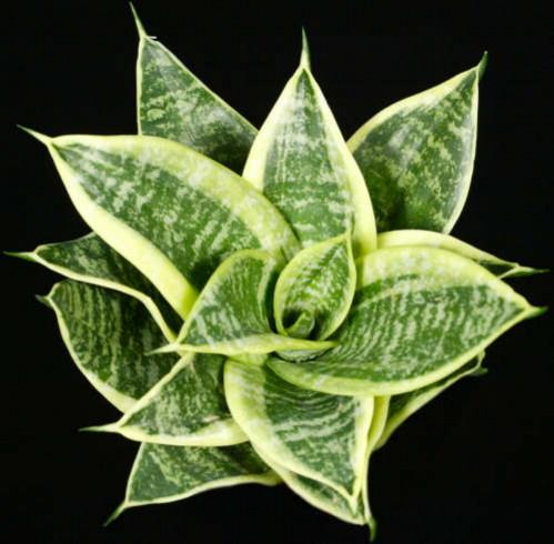 каталог комнатный растений с фото