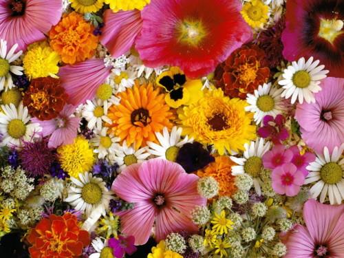 О чем говорят цветы