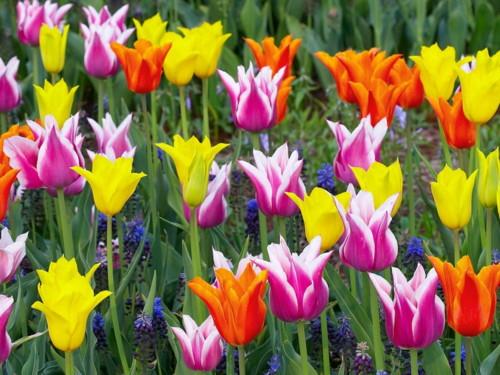 Выгонка растений и цветов.