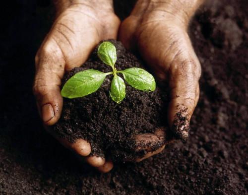 Формирование внешнего вида растений